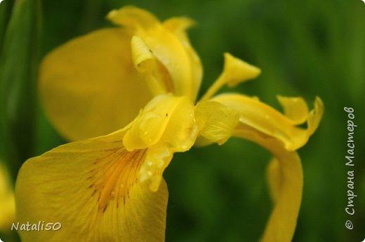 Доброго всем дня!! На улице дожди и прохладно,но цветы радуют.вот решила поделиться с вами.. приглашаю на прогулку..  фото 8