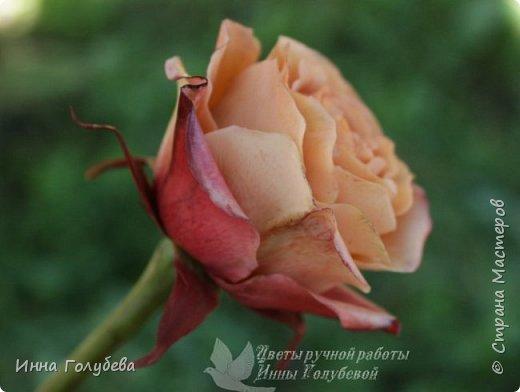 Девочки,сегодня лепила вот такую розу с живого образца и отсняла поностью сборку и тонировку лепестков,чашелистников и стебля.Хотела завтра выложить,но решила сегодня,а то решили малых повести в зоопарк) .И воскресенье буду занята. Так что выкладываю) фото 2