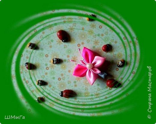 Пришла пора цветов и бабочек. фото 1