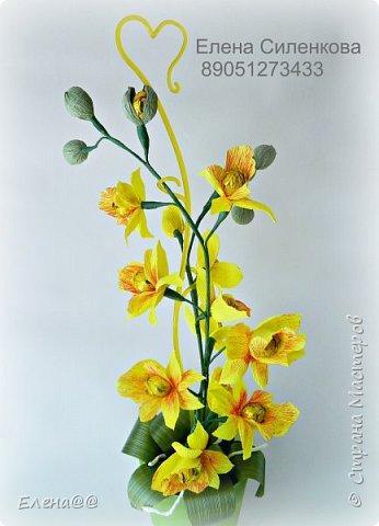 Здравствуйте жители см. 12 июня у моей любимой мамочки День рождения. Она у меня разводит орхидеи и так сложилась традиция что мы ей всегда на праздники дарим вместо букета цветов орхидеи в горшочке. и вот дабы не нарушать традицию пошла я в цветочные магазины ( их у нас всего то три)....и в итоге ни чего нового не нашла........все представленные там сорта у мамы уже есть. Вот так и пришла мне мысль вывести новый сорт. фото 1