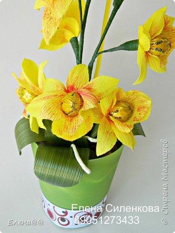 Здравствуйте жители см. 12 июня у моей любимой мамочки День рождения. Она у меня разводит орхидеи и так сложилась традиция что мы ей всегда на праздники дарим вместо букета цветов орхидеи в горшочке. и вот дабы не нарушать традицию пошла я в цветочные магазины ( их у нас всего то три)....и в итоге ни чего нового не нашла........все представленные там сорта у мамы уже есть. Вот так и пришла мне мысль вывести новый сорт. фото 3