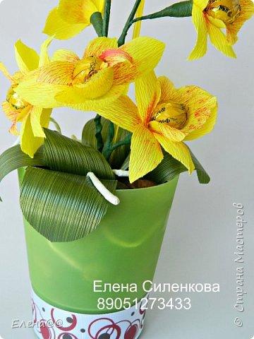 Здравствуйте жители см. 12 июня у моей любимой мамочки День рождения. Она у меня разводит орхидеи и так сложилась традиция что мы ей всегда на праздники дарим вместо букета цветов орхидеи в горшочке. и вот дабы не нарушать традицию пошла я в цветочные магазины ( их у нас всего то три)....и в итоге ни чего нового не нашла........все представленные там сорта у мамы уже есть. Вот так и пришла мне мысль вывести новый сорт. фото 4