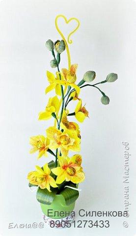 Здравствуйте жители см. 12 июня у моей любимой мамочки День рождения. Она у меня разводит орхидеи и так сложилась традиция что мы ей всегда на праздники дарим вместо букета цветов орхидеи в горшочке. и вот дабы не нарушать традицию пошла я в цветочные магазины ( их у нас всего то три)....и в итоге ни чего нового не нашла........все представленные там сорта у мамы уже есть. Вот так и пришла мне мысль вывести новый сорт. фото 5