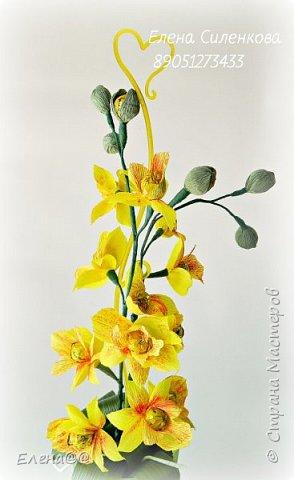 Здравствуйте жители см. 12 июня у моей любимой мамочки День рождения. Она у меня разводит орхидеи и так сложилась традиция что мы ей всегда на праздники дарим вместо букета цветов орхидеи в горшочке. и вот дабы не нарушать традицию пошла я в цветочные магазины ( их у нас всего то три)....и в итоге ни чего нового не нашла........все представленные там сорта у мамы уже есть. Вот так и пришла мне мысль вывести новый сорт. фото 2