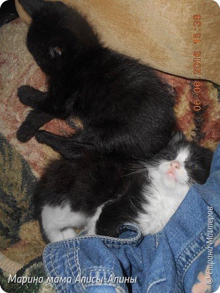 Привет всем!У нас появились новые питомцы!. Пред история.В апреле этого года у меня пропали два кота.Ушли и не вернулись.Мы все очень переживали.......Не передать мои эмоции по от ношению к тем людям, которые обижают животных....Думала, что, пожалуй с меня хватит всяких кошек.И вот в конце мая шла с работы,гляжу, в закутке, сидят котята.Один уже полудохленький валяется,второй ещё шевелится...Блииииииииииин, да что ж за люди!!!!!!!!!!!Нелюди, ей богу!!!!!!!!!!Ушла.Забрала дочку из садика.Вернулись.Забрали.Поняла, что не смогу спать спокойно, они же не выживут.Привезли домой.Оказалось, что сами ещё не едят.Хорошо что уже 25 мая, начались каникулы.Провела с дочкой мастер-класс по кормлению из бутылочки и промывание-закапывание глаз.Оба с коньюктивитом оказались. Сейчас у нас уже всё хорошо.Кушаем сами из своих мисочек. фото 18