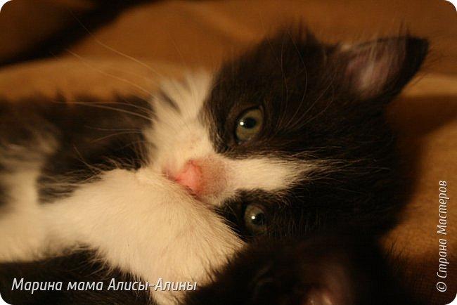 Привет всем!У нас появились новые питомцы!. Пред история.В апреле этого года у меня пропали два кота.Ушли и не вернулись.Мы все очень переживали.......Не передать мои эмоции по от ношению к тем людям, которые обижают животных....Думала, что, пожалуй с меня хватит всяких кошек.И вот в конце мая шла с работы,гляжу, в закутке, сидят котята.Один уже полудохленький валяется,второй ещё шевелится...Блииииииииииин, да что ж за люди!!!!!!!!!!!Нелюди, ей богу!!!!!!!!!!Ушла.Забрала дочку из садика.Вернулись.Забрали.Поняла, что не смогу спать спокойно, они же не выживут.Привезли домой.Оказалось, что сами ещё не едят.Хорошо что уже 25 мая, начались каникулы.Провела с дочкой мастер-класс по кормлению из бутылочки и промывание-закапывание глаз.Оба с коньюктивитом оказались. Сейчас у нас уже всё хорошо.Кушаем сами из своих мисочек. фото 9