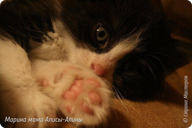 Привет всем!У нас появились новые питомцы!. Пред история.В апреле этого года у меня пропали два кота.Ушли и не вернулись.Мы все очень переживали.......Не передать мои эмоции по от ношению к тем людям, которые обижают животных....Думала, что, пожалуй с меня хватит всяких кошек.И вот в конце мая шла с работы,гляжу, в закутке, сидят котята.Один уже полудохленький валяется,второй ещё шевелится...Блииииииииииин, да что ж за люди!!!!!!!!!!!Нелюди, ей богу!!!!!!!!!!Ушла.Забрала дочку из садика.Вернулись.Забрали.Поняла, что не смогу спать спокойно, они же не выживут.Привезли домой.Оказалось, что сами ещё не едят.Хорошо что уже 25 мая, начались каникулы.Провела с дочкой мастер-класс по кормлению из бутылочки и промывание-закапывание глаз.Оба с коньюктивитом оказались. Сейчас у нас уже всё хорошо.Кушаем сами из своих мисочек. фото 10