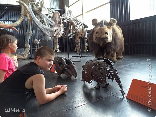 В Чемальском районе Республики Алтай появилась новая достопримечательность – «Палеопарк». Он находится в селе Эликманар и на данный момент является самым большим музеем естественной истории в Сибири по количеству палеонтологических экспонатов. фото 12