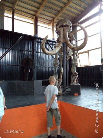 В Чемальском районе Республики Алтай появилась новая достопримечательность – «Палеопарк». Он находится в селе Эликманар и на данный момент является самым большим музеем естественной истории в Сибири по количеству палеонтологических экспонатов. фото 14