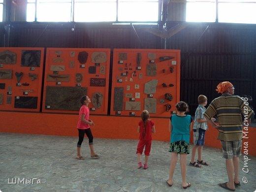 В Чемальском районе Республики Алтай появилась новая достопримечательность – «Палеопарк». Он находится в селе Эликманар и на данный момент является самым большим музеем естественной истории в Сибири по количеству палеонтологических экспонатов. фото 18