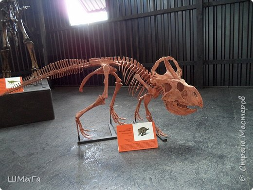 В Чемальском районе Республики Алтай появилась новая достопримечательность – «Палеопарк». Он находится в селе Эликманар и на данный момент является самым большим музеем естественной истории в Сибири по количеству палеонтологических экспонатов. фото 20