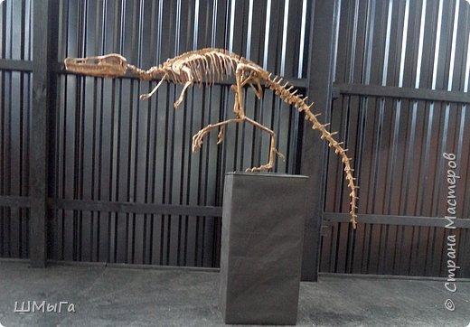 В Чемальском районе Республики Алтай появилась новая достопримечательность – «Палеопарк». Он находится в селе Эликманар и на данный момент является самым большим музеем естественной истории в Сибири по количеству палеонтологических экспонатов. фото 21