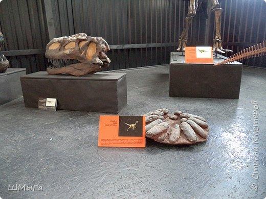 В Чемальском районе Республики Алтай появилась новая достопримечательность – «Палеопарк». Он находится в селе Эликманар и на данный момент является самым большим музеем естественной истории в Сибири по количеству палеонтологических экспонатов. фото 22