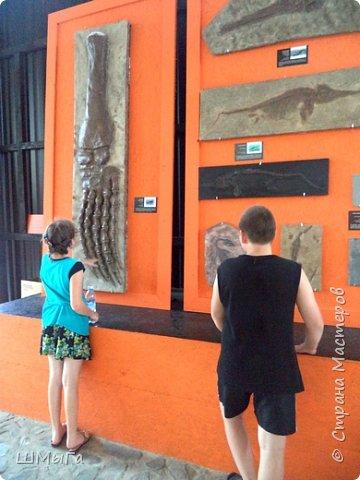 В Чемальском районе Республики Алтай появилась новая достопримечательность – «Палеопарк». Он находится в селе Эликманар и на данный момент является самым большим музеем естественной истории в Сибири по количеству палеонтологических экспонатов. фото 25