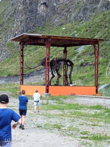 В Чемальском районе Республики Алтай появилась новая достопримечательность – «Палеопарк». Он находится в селе Эликманар и на данный момент является самым большим музеем естественной истории в Сибири по количеству палеонтологических экспонатов. фото 8