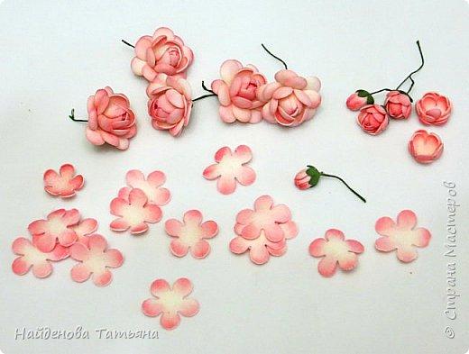 Мои цветочки )))))))) фото 4