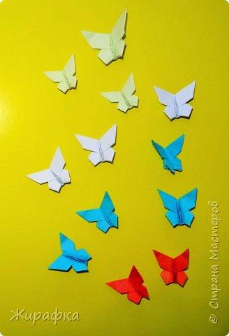 Бабочки... фото 1
