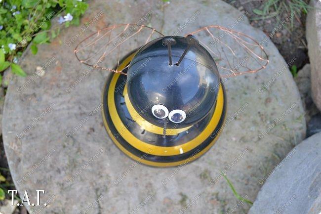 Познакомьтесь с новоселами моего участка.  Муха Цокотуха и бабушка Пчела. фото 11