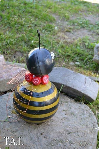 Познакомьтесь с новоселами моего участка.  Муха Цокотуха и бабушка Пчела. фото 12