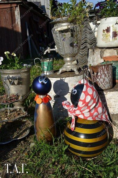 Познакомьтесь с новоселами моего участка.  Муха Цокотуха и бабушка Пчела. фото 18