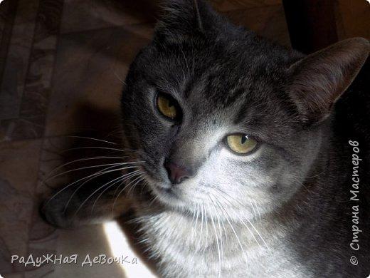 Всем привет! Сегодня вы увидите фото жителей дачи, кота Тимофея и курииииц!!! фото 2