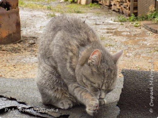 Всем привет! Сегодня вы увидите фото жителей дачи, кота Тимофея и курииииц!!! фото 9