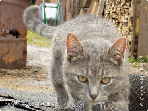 Всем привет! Сегодня вы увидите фото жителей дачи, кота Тимофея и курииииц!!! фото 10
