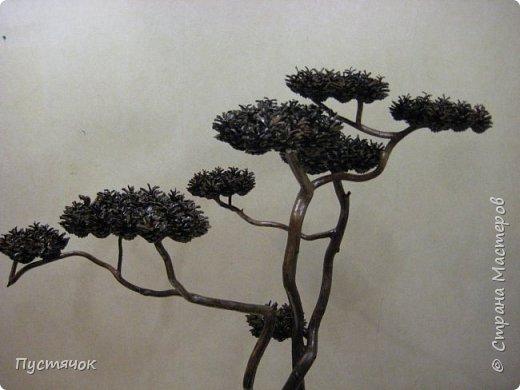 """Всех приветствую !!! Сегодня покажу деревья, которые полностью сделаны из природного материала. Конечно не считая алебастра....Над деревьями трудилась дочь...я была в подмастерьях...Развести алебастр...Покрыть лаком  ствол и шишки...Это я....А вот колдовала над """"шишечными пазлами"""" Дашка...и кропотливо склеивала их тоже она...И выбирала """"этажи"""" для будущих крон... Я, как обычно, делала несколько вариантов фотографий...Мало что получилось...Трудно передать весь объем и легкость первого дерева....а уж о втором и говорить не приходится....Оно брутальное...массивное...высокое...но снимки (а точнее я в роли фотографа) сделали его темным и совсем не похожим на себя...Девочки...честное слово...они такие красивые.... фото 5"""
