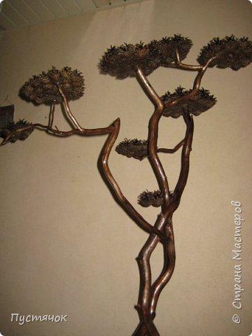 """Всех приветствую !!! Сегодня покажу деревья, которые полностью сделаны из природного материала. Конечно не считая алебастра....Над деревьями трудилась дочь...я была в подмастерьях...Развести алебастр...Покрыть лаком  ствол и шишки...Это я....А вот колдовала над """"шишечными пазлами"""" Дашка...и кропотливо склеивала их тоже она...И выбирала """"этажи"""" для будущих крон... Я, как обычно, делала несколько вариантов фотографий...Мало что получилось...Трудно передать весь объем и легкость первого дерева....а уж о втором и говорить не приходится....Оно брутальное...массивное...высокое...но снимки (а точнее я в роли фотографа) сделали его темным и совсем не похожим на себя...Девочки...честное слово...они такие красивые.... фото 9"""