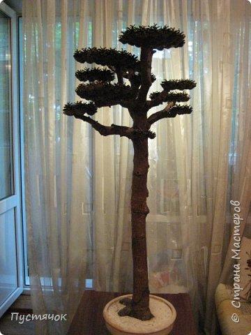 """Всех приветствую !!! Сегодня покажу деревья, которые полностью сделаны из природного материала. Конечно не считая алебастра....Над деревьями трудилась дочь...я была в подмастерьях...Развести алебастр...Покрыть лаком  ствол и шишки...Это я....А вот колдовала над """"шишечными пазлами"""" Дашка...и кропотливо склеивала их тоже она...И выбирала """"этажи"""" для будущих крон... Я, как обычно, делала несколько вариантов фотографий...Мало что получилось...Трудно передать весь объем и легкость первого дерева....а уж о втором и говорить не приходится....Оно брутальное...массивное...высокое...но снимки (а точнее я в роли фотографа) сделали его темным и совсем не похожим на себя...Девочки...честное слово...они такие красивые.... фото 22"""