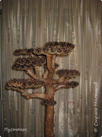"""Всех приветствую !!! Сегодня покажу деревья, которые полностью сделаны из природного материала. Конечно не считая алебастра....Над деревьями трудилась дочь...я была в подмастерьях...Развести алебастр...Покрыть лаком  ствол и шишки...Это я....А вот колдовала над """"шишечными пазлами"""" Дашка...и кропотливо склеивала их тоже она...И выбирала """"этажи"""" для будущих крон... Я, как обычно, делала несколько вариантов фотографий...Мало что получилось...Трудно передать весь объем и легкость первого дерева....а уж о втором и говорить не приходится....Оно брутальное...массивное...высокое...но снимки (а точнее я в роли фотографа) сделали его темным и совсем не похожим на себя...Девочки...честное слово...они такие красивые.... фото 23"""