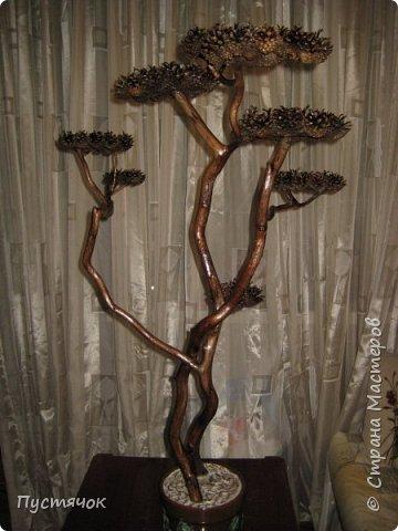 """Всех приветствую !!! Сегодня покажу деревья, которые полностью сделаны из природного материала. Конечно не считая алебастра....Над деревьями трудилась дочь...я была в подмастерьях...Развести алебастр...Покрыть лаком  ствол и шишки...Это я....А вот колдовала над """"шишечными пазлами"""" Дашка...и кропотливо склеивала их тоже она...И выбирала """"этажи"""" для будущих крон... Я, как обычно, делала несколько вариантов фотографий...Мало что получилось...Трудно передать весь объем и легкость первого дерева....а уж о втором и говорить не приходится....Оно брутальное...массивное...высокое...но снимки (а точнее я в роли фотографа) сделали его темным и совсем не похожим на себя...Девочки...честное слово...они такие красивые.... фото 17"""