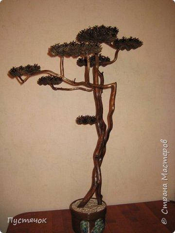 """Всех приветствую !!! Сегодня покажу деревья, которые полностью сделаны из природного материала. Конечно не считая алебастра....Над деревьями трудилась дочь...я была в подмастерьях...Развести алебастр...Покрыть лаком  ствол и шишки...Это я....А вот колдовала над """"шишечными пазлами"""" Дашка...и кропотливо склеивала их тоже она...И выбирала """"этажи"""" для будущих крон... Я, как обычно, делала несколько вариантов фотографий...Мало что получилось...Трудно передать весь объем и легкость первого дерева....а уж о втором и говорить не приходится....Оно брутальное...массивное...высокое...но снимки (а точнее я в роли фотографа) сделали его темным и совсем не похожим на себя...Девочки...честное слово...они такие красивые.... фото 19"""
