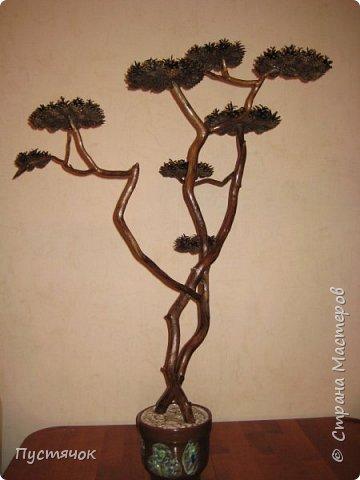 """Всех приветствую !!! Сегодня покажу деревья, которые полностью сделаны из природного материала. Конечно не считая алебастра....Над деревьями трудилась дочь...я была в подмастерьях...Развести алебастр...Покрыть лаком  ствол и шишки...Это я....А вот колдовала над """"шишечными пазлами"""" Дашка...и кропотливо склеивала их тоже она...И выбирала """"этажи"""" для будущих крон... Я, как обычно, делала несколько вариантов фотографий...Мало что получилось...Трудно передать весь объем и легкость первого дерева....а уж о втором и говорить не приходится....Оно брутальное...массивное...высокое...но снимки (а точнее я в роли фотографа) сделали его темным и совсем не похожим на себя...Девочки...честное слово...они такие красивые.... фото 1"""