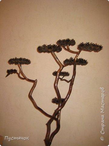 """Всех приветствую !!! Сегодня покажу деревья, которые полностью сделаны из природного материала. Конечно не считая алебастра....Над деревьями трудилась дочь...я была в подмастерьях...Развести алебастр...Покрыть лаком  ствол и шишки...Это я....А вот колдовала над """"шишечными пазлами"""" Дашка...и кропотливо склеивала их тоже она...И выбирала """"этажи"""" для будущих крон... Я, как обычно, делала несколько вариантов фотографий...Мало что получилось...Трудно передать весь объем и легкость первого дерева....а уж о втором и говорить не приходится....Оно брутальное...массивное...высокое...но снимки (а точнее я в роли фотографа) сделали его темным и совсем не похожим на себя...Девочки...честное слово...они такие красивые.... фото 20"""