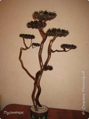 """Всех приветствую !!! Сегодня покажу деревья, которые полностью сделаны из природного материала. Конечно не считая алебастра....Над деревьями трудилась дочь...я была в подмастерьях...Развести алебастр...Покрыть лаком  ствол и шишки...Это я....А вот колдовала над """"шишечными пазлами"""" Дашка...и кропотливо склеивала их тоже она...И выбирала """"этажи"""" для будущих крон... Я, как обычно, делала несколько вариантов фотографий...Мало что получилось...Трудно передать весь объем и легкость первого дерева....а уж о втором и говорить не приходится....Оно брутальное...массивное...высокое...но снимки (а точнее я в роли фотографа) сделали его темным и совсем не похожим на себя...Девочки...честное слово...они такие красивые.... фото 21"""