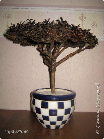 """Всех приветствую !!! Сегодня покажу деревья, которые полностью сделаны из природного материала. Конечно не считая алебастра....Над деревьями трудилась дочь...я была в подмастерьях...Развести алебастр...Покрыть лаком  ствол и шишки...Это я....А вот колдовала над """"шишечными пазлами"""" Дашка...и кропотливо склеивала их тоже она...И выбирала """"этажи"""" для будущих крон... Я, как обычно, делала несколько вариантов фотографий...Мало что получилось...Трудно передать весь объем и легкость первого дерева....а уж о втором и говорить не приходится....Оно брутальное...массивное...высокое...но снимки (а точнее я в роли фотографа) сделали его темным и совсем не похожим на себя...Девочки...честное слово...они такие красивые.... фото 35"""