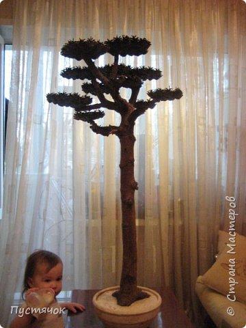 """Всех приветствую !!! Сегодня покажу деревья, которые полностью сделаны из природного материала. Конечно не считая алебастра....Над деревьями трудилась дочь...я была в подмастерьях...Развести алебастр...Покрыть лаком  ствол и шишки...Это я....А вот колдовала над """"шишечными пазлами"""" Дашка...и кропотливо склеивала их тоже она...И выбирала """"этажи"""" для будущих крон... Я, как обычно, делала несколько вариантов фотографий...Мало что получилось...Трудно передать весь объем и легкость первого дерева....а уж о втором и говорить не приходится....Оно брутальное...массивное...высокое...но снимки (а точнее я в роли фотографа) сделали его темным и совсем не похожим на себя...Девочки...честное слово...они такие красивые.... фото 25"""