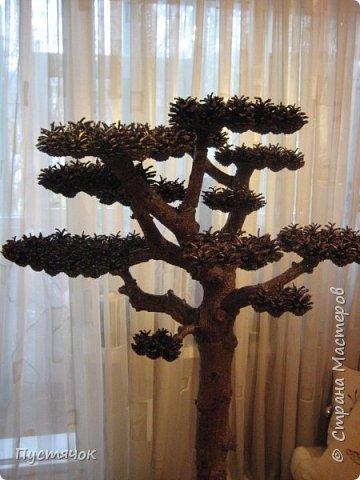 """Всех приветствую !!! Сегодня покажу деревья, которые полностью сделаны из природного материала. Конечно не считая алебастра....Над деревьями трудилась дочь...я была в подмастерьях...Развести алебастр...Покрыть лаком  ствол и шишки...Это я....А вот колдовала над """"шишечными пазлами"""" Дашка...и кропотливо склеивала их тоже она...И выбирала """"этажи"""" для будущих крон... Я, как обычно, делала несколько вариантов фотографий...Мало что получилось...Трудно передать весь объем и легкость первого дерева....а уж о втором и говорить не приходится....Оно брутальное...массивное...высокое...но снимки (а точнее я в роли фотографа) сделали его темным и совсем не похожим на себя...Девочки...честное слово...они такие красивые.... фото 27"""
