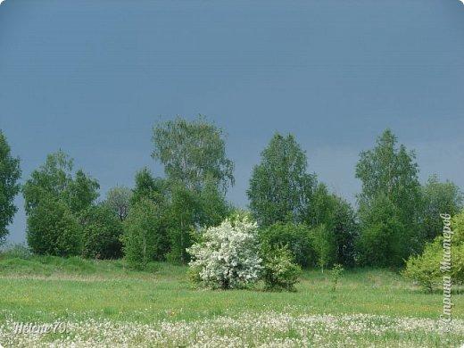 И говор вод, и тень дубров, И благовоние цветов; Какой душе не мило это?  (Е. Баратынский) фото 1