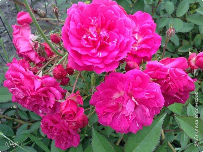 Начну с.роз... фото 7