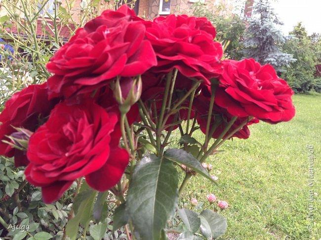 Начну с.роз... фото 9