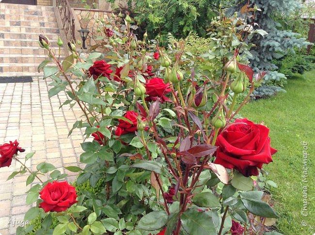 Начну с.роз... фото 10