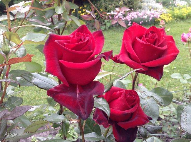 Начну с.роз... фото 12