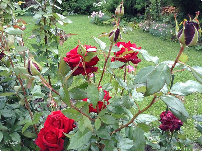 Начну с.роз... фото 13