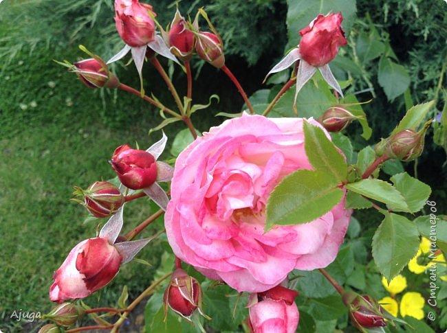 Начну с.роз... фото 6