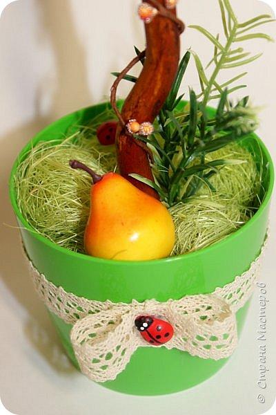 Очень яркий фруктовый топиарий) фото 3