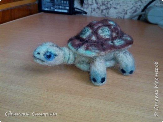 Совенок и черепаха фото 2