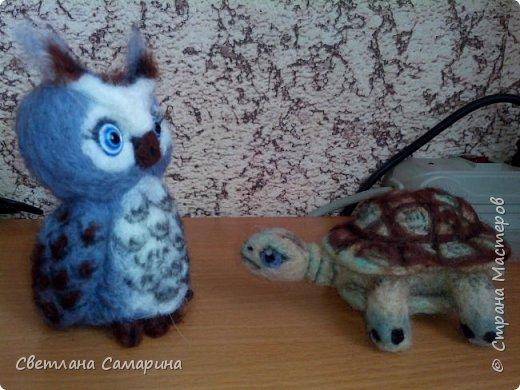 Совенок и черепаха фото 4