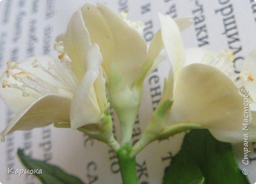 Здравствуйте жители СМ!  Недавно лепила жасмин из хф - и просто влюбилась в этот цветок! Вот что получилось. Решила сфоткать процесс создания цветочка - вдруг кому-то пригодится. фото 22